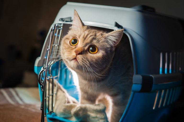 Pets travel tricks