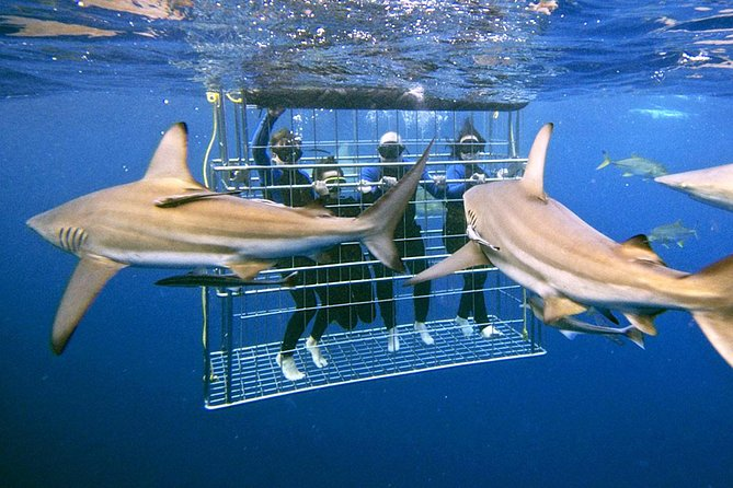 What can you see in South Africa and diving with sharks